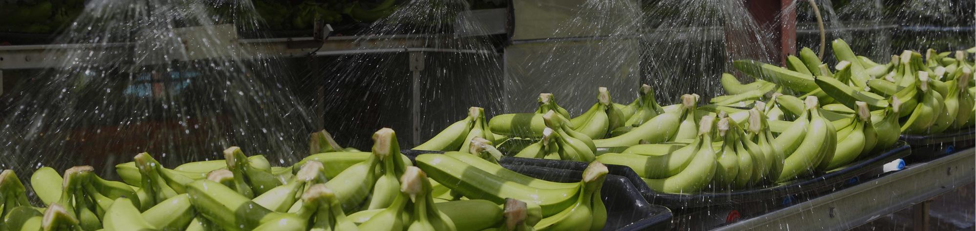 industries-food-produce