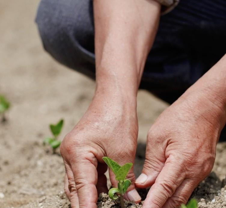 Plant in Field