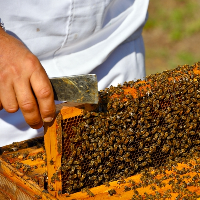 featured bee image